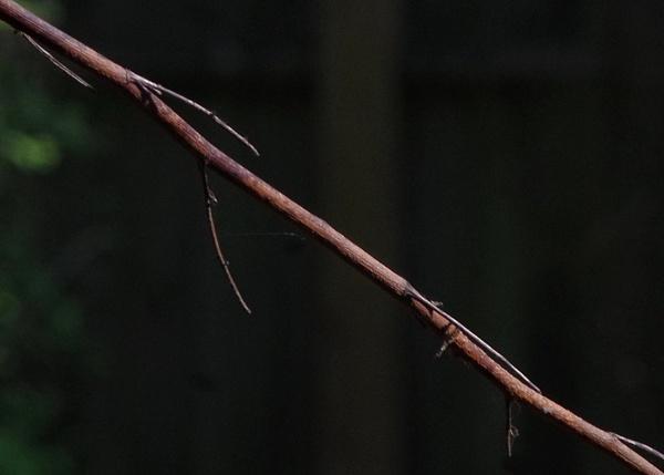 Branch line. by Mollycat