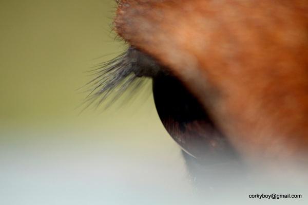 Polly\'s eye. by rustyshackleford
