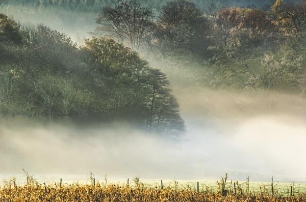 Dawn at Paddockhurst Wood by BiffoClick
