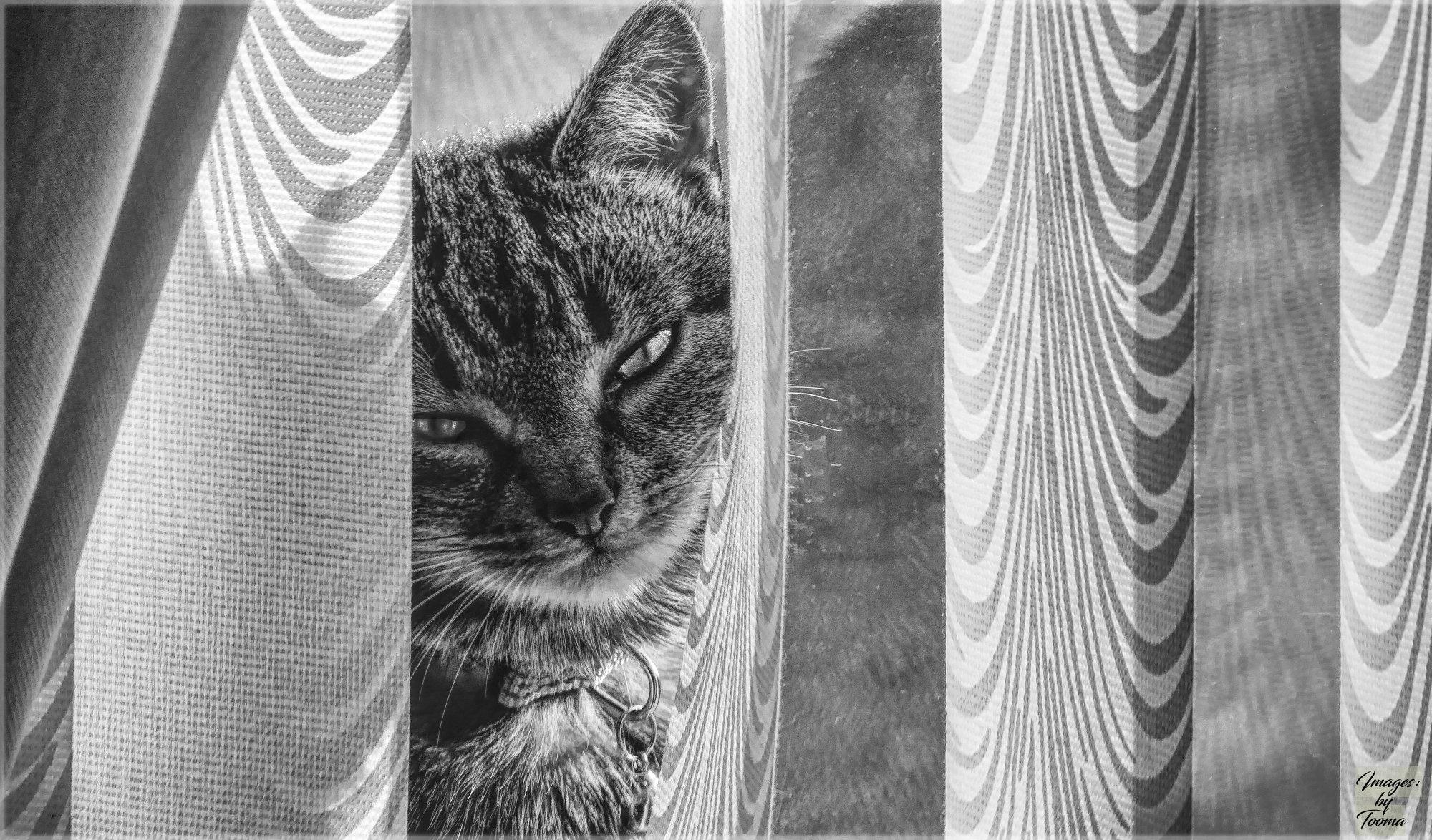 Peeking At The Window.