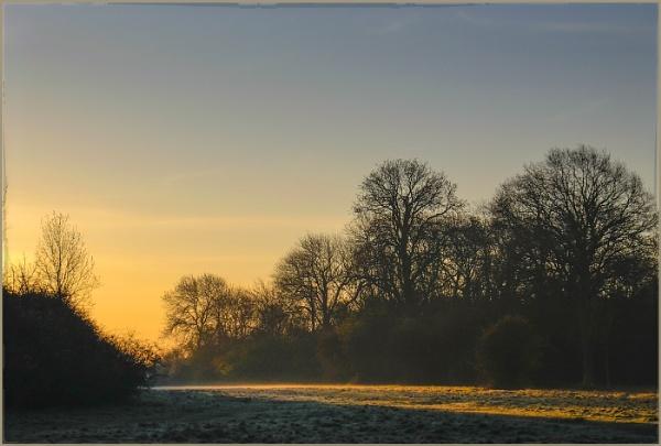 Forest Dawn by AlfieK