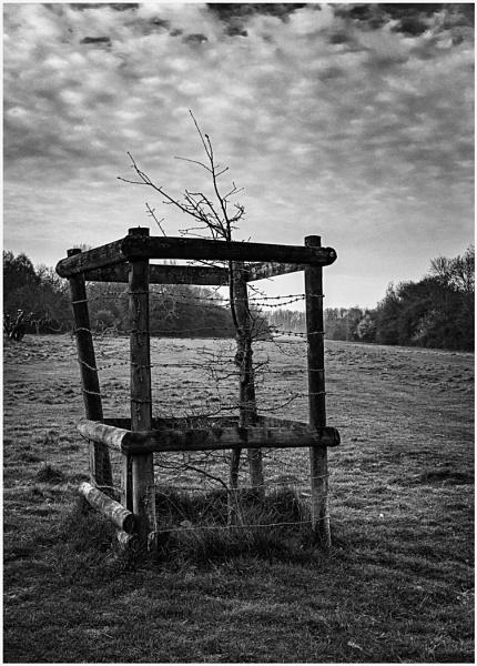 Fenced In by AlfieK