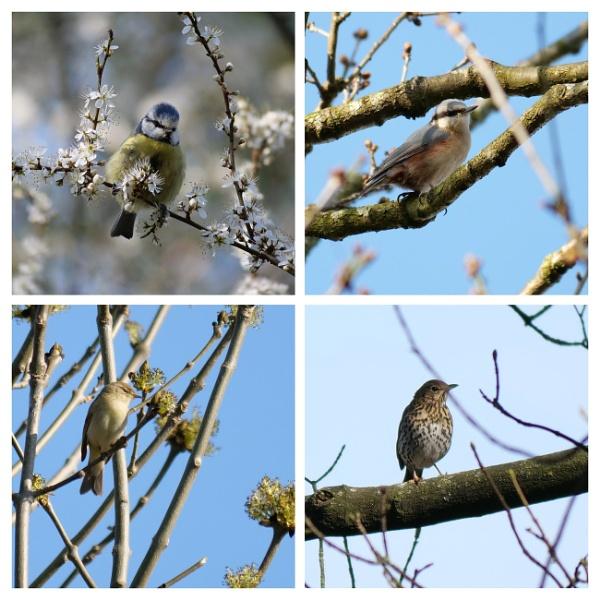 The Joy of Spring Walks by wvbarnes