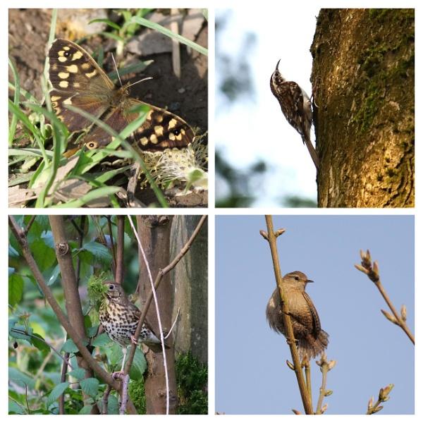 Easter Wildlife by wvbarnes