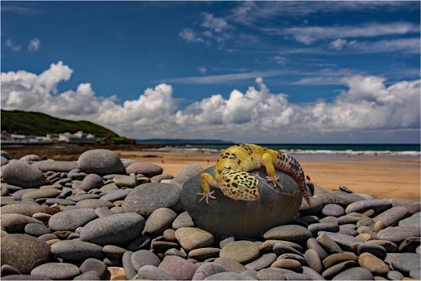 Stranger on the shore by dven