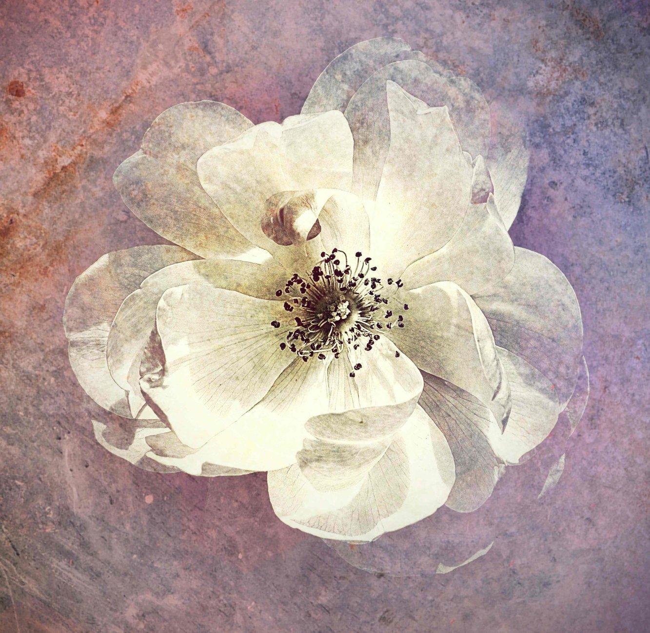 Floral Impressionism