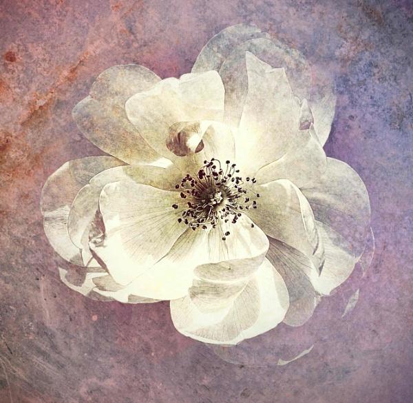 Floral Impressionism by adagio