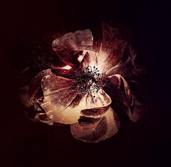 Flora by adagio