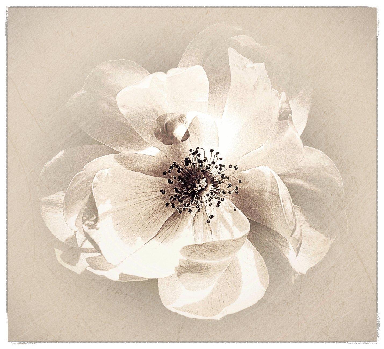 Flora x 2