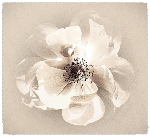 Flora x 2 by adagio