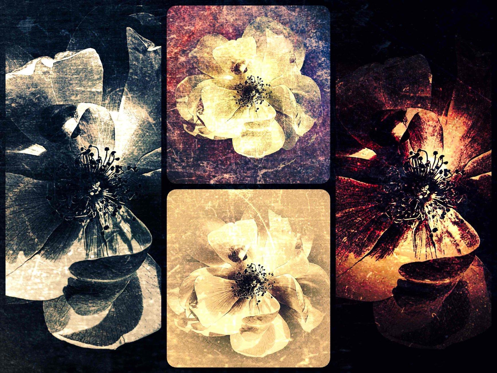 Flora x 4