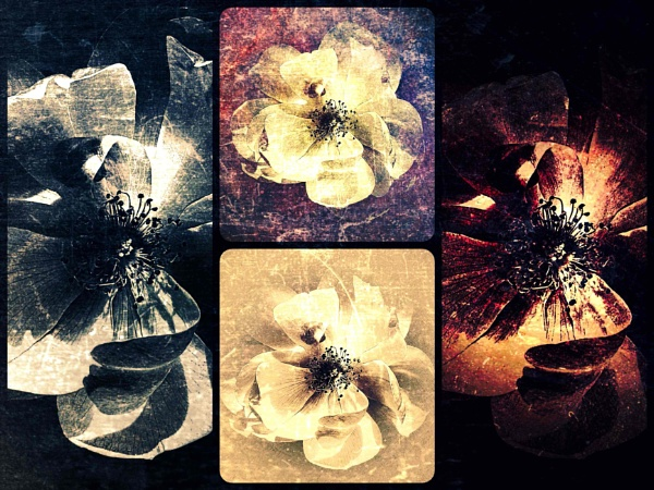 Flora x 4 by adagio
