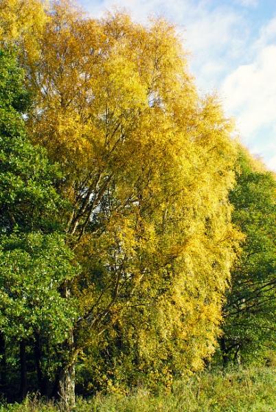 Autumn by Bert47