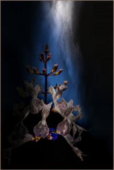 Flower in the Spotlight