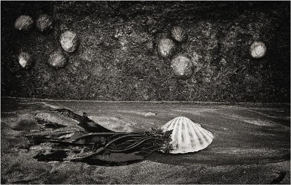 Low Tide by MalcolmM