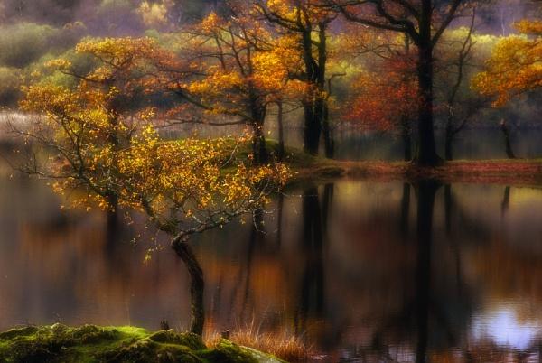 Tree Line by chris-p