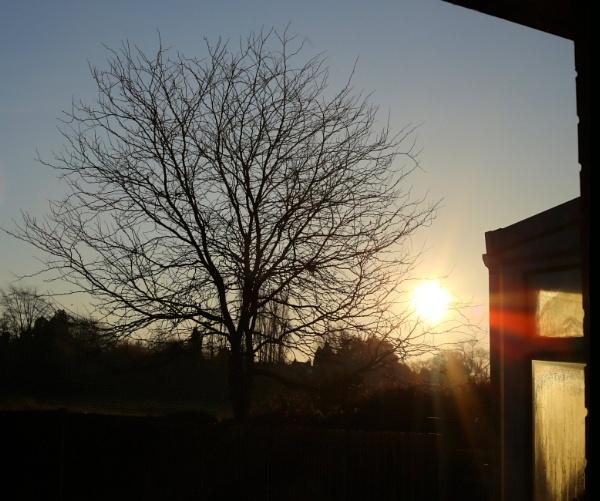 Back Garden Sunrise by RysiekJan