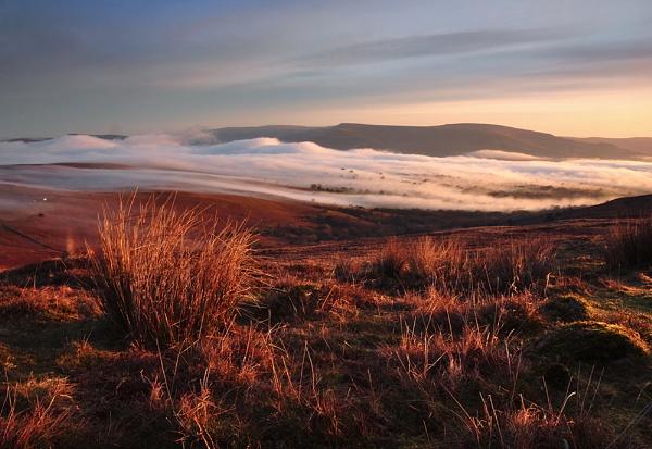 Moorland Rust by Buffalo_Tom