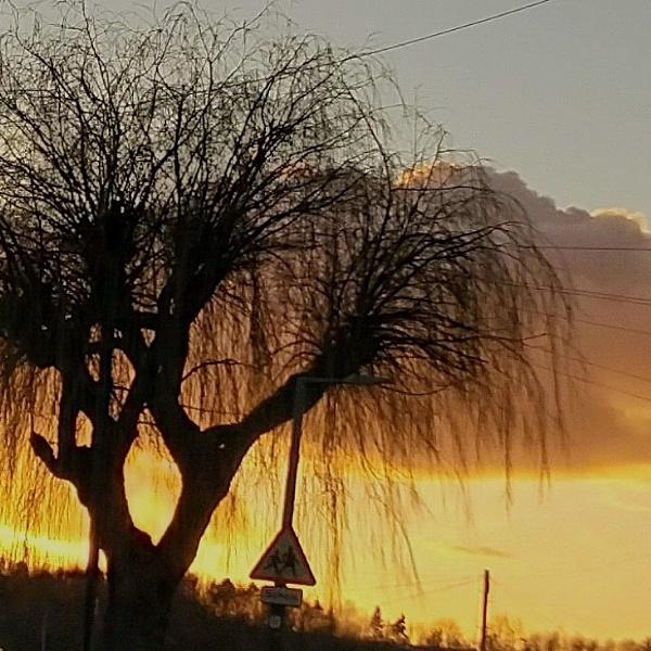 Whomping tree by moglen