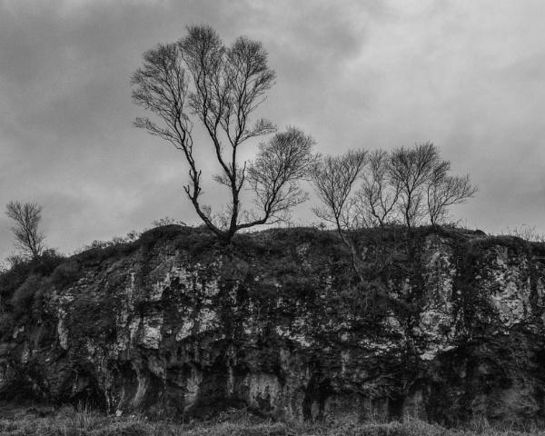 Trees at Croggan by AndrewAlbert
