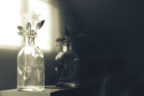 Rise and Shine by Daisymaye