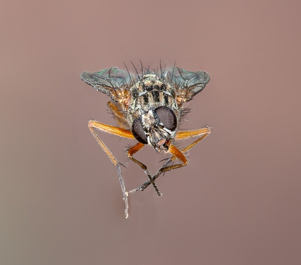 House Fly by Ray_Seagrove
