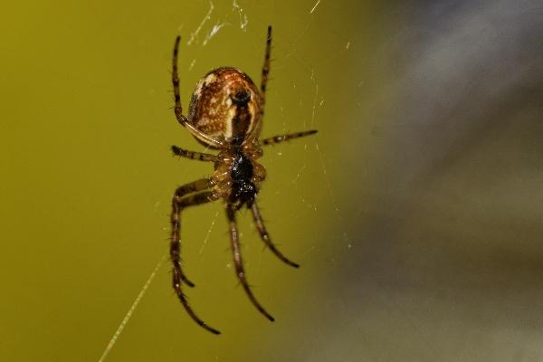 arachnaphobia by meyeview