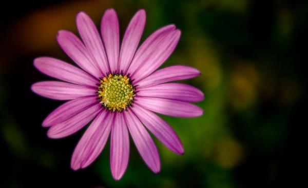 Flower by Yogendra