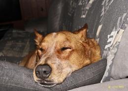 Comfy Snooze.
