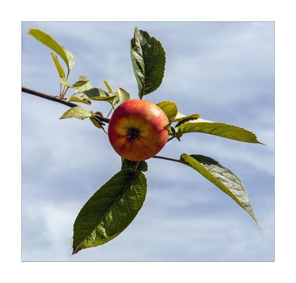 An Apple a Day .......... by DicksPics