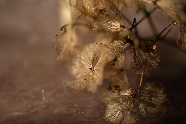 Tumbleweed by Fefe