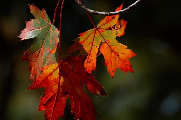Autumn color by manicam