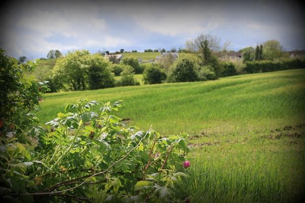summer Fields by gunner44