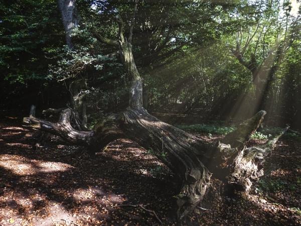 Fallen Tree by woodini254