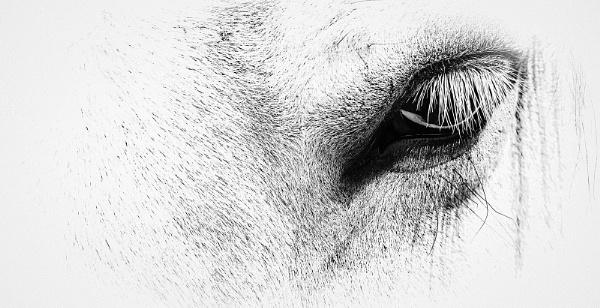 Watchful Eye by AllistairK