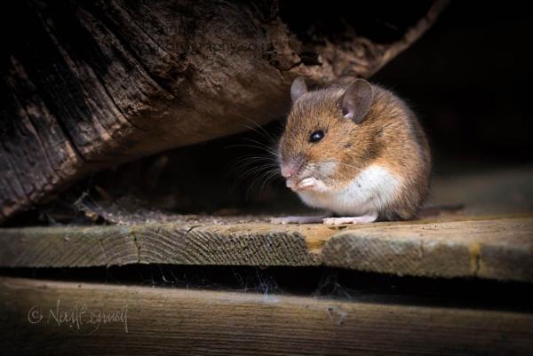 Garden Visitor by NoelBennettPhotography