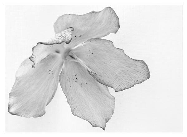 Petals by suemart