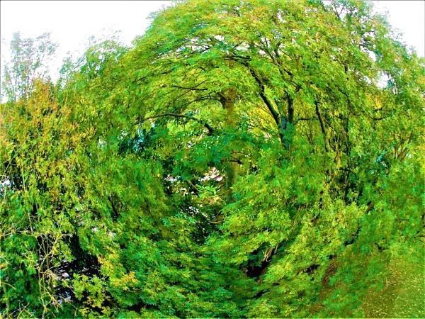 Organic Whirlpool by wsh