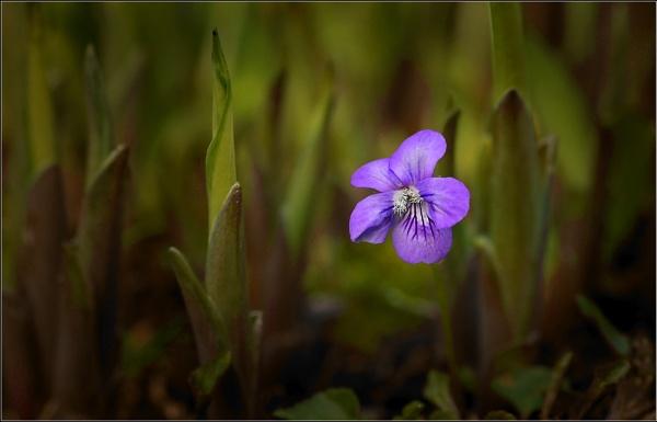 Violet. by bricurtis