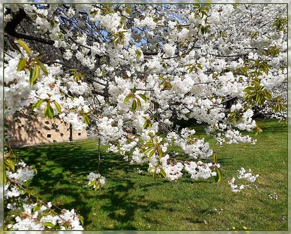 Springtime. by Sylviwhalley