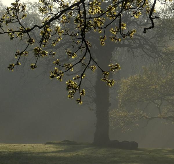 Misty rays by SUE118