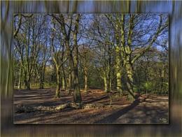 Woodland Exercise