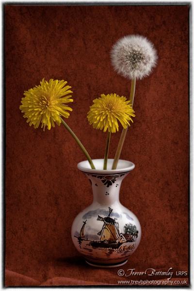 Dandelions & Clock by TrevBatWCC