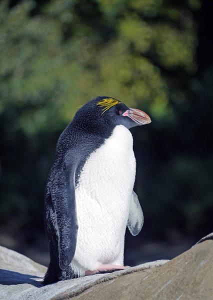 marconi Penguin by StevenBest