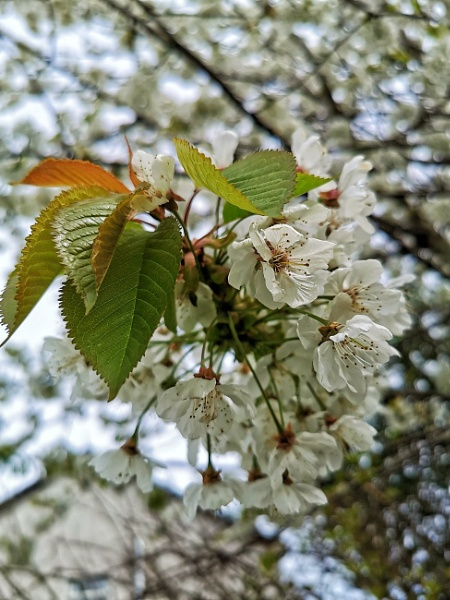 Blossom by wisk