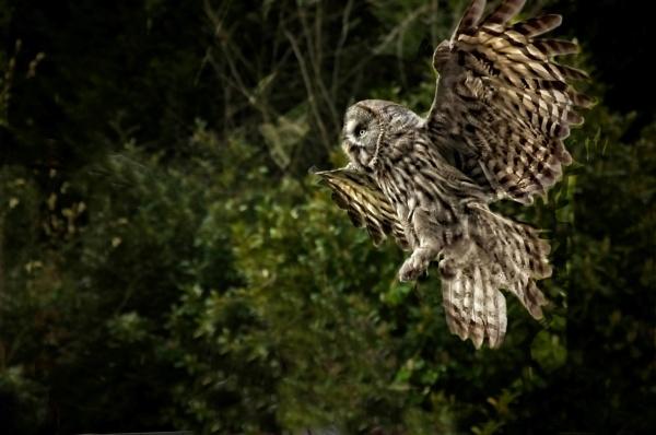 Night Flight by sweetpea62