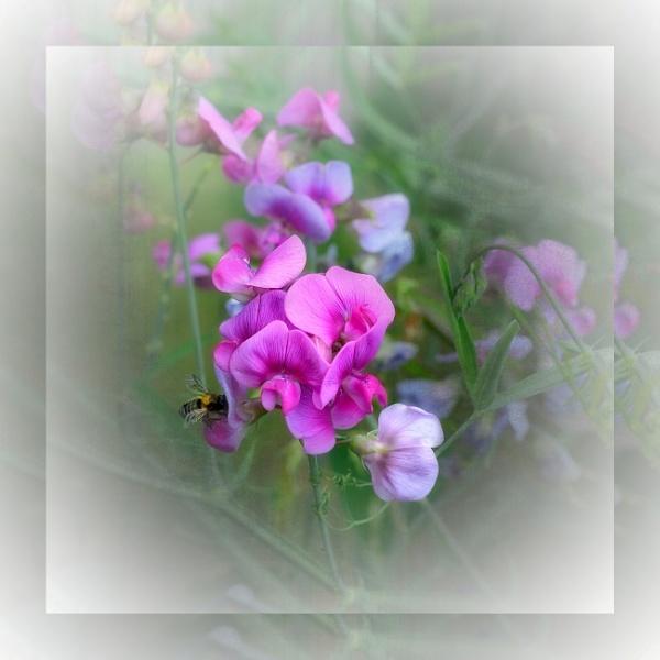 Sweet Dreams by sweetpea62