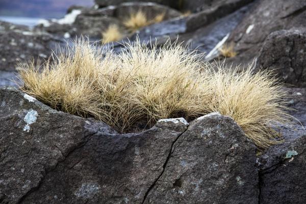 On the Rocks by Irishkate