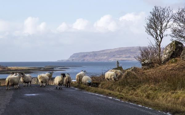 Road  Block by Irishkate