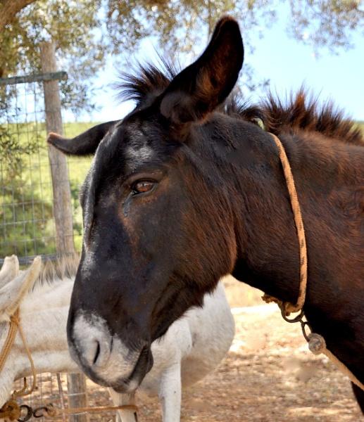 No donkey kicks just donkey pics !! by Chinga